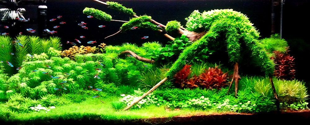 Incredible Fish Tank Design Competition - LGF Pages