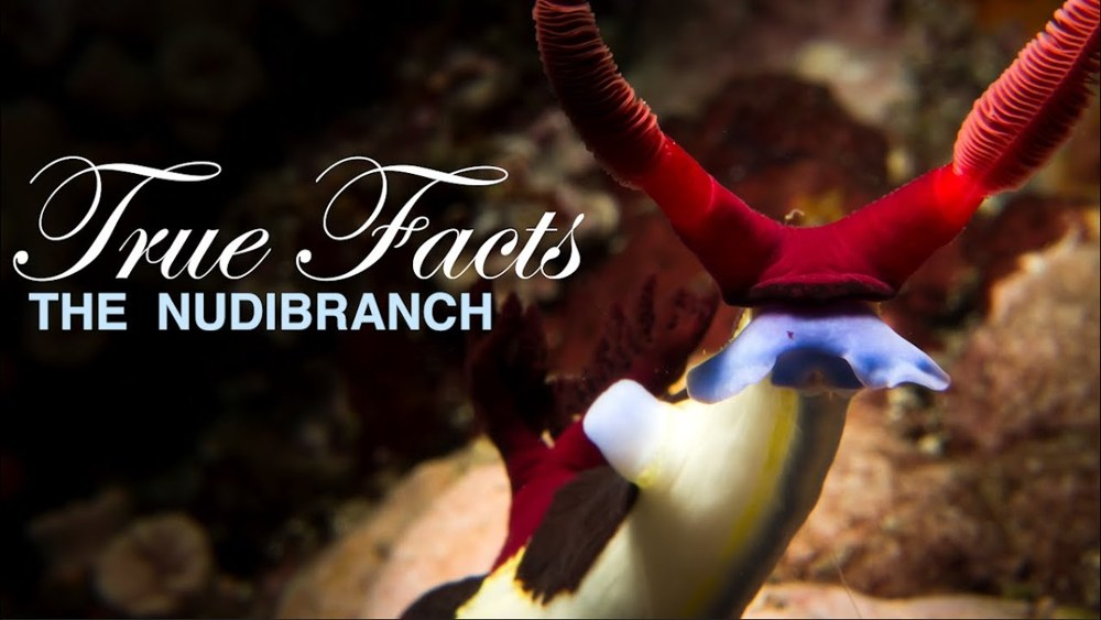 Ze Frank's True Facts: Those Freaky Nudibranchs